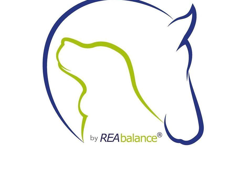 Geschützt: Grund-Seminar der Strukturellen Faszien-Therapie am Pferd